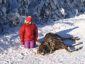 Kaadettu hirvi ja tyttö